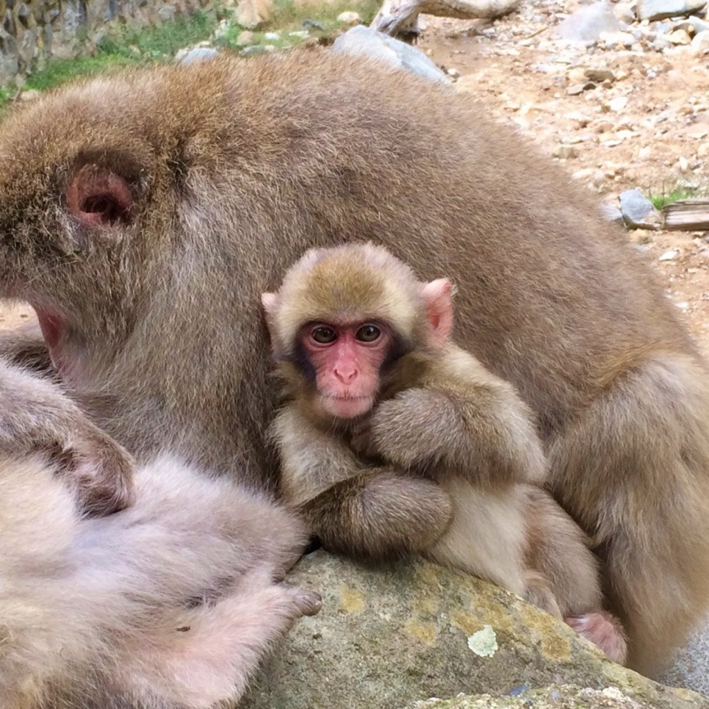 Snow Monkeys_181014_0366