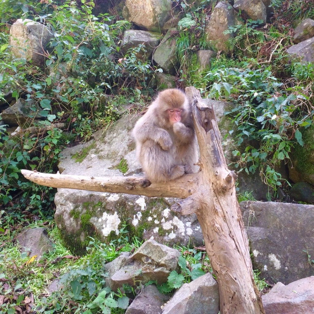 Snow Monkeys_181014_0369