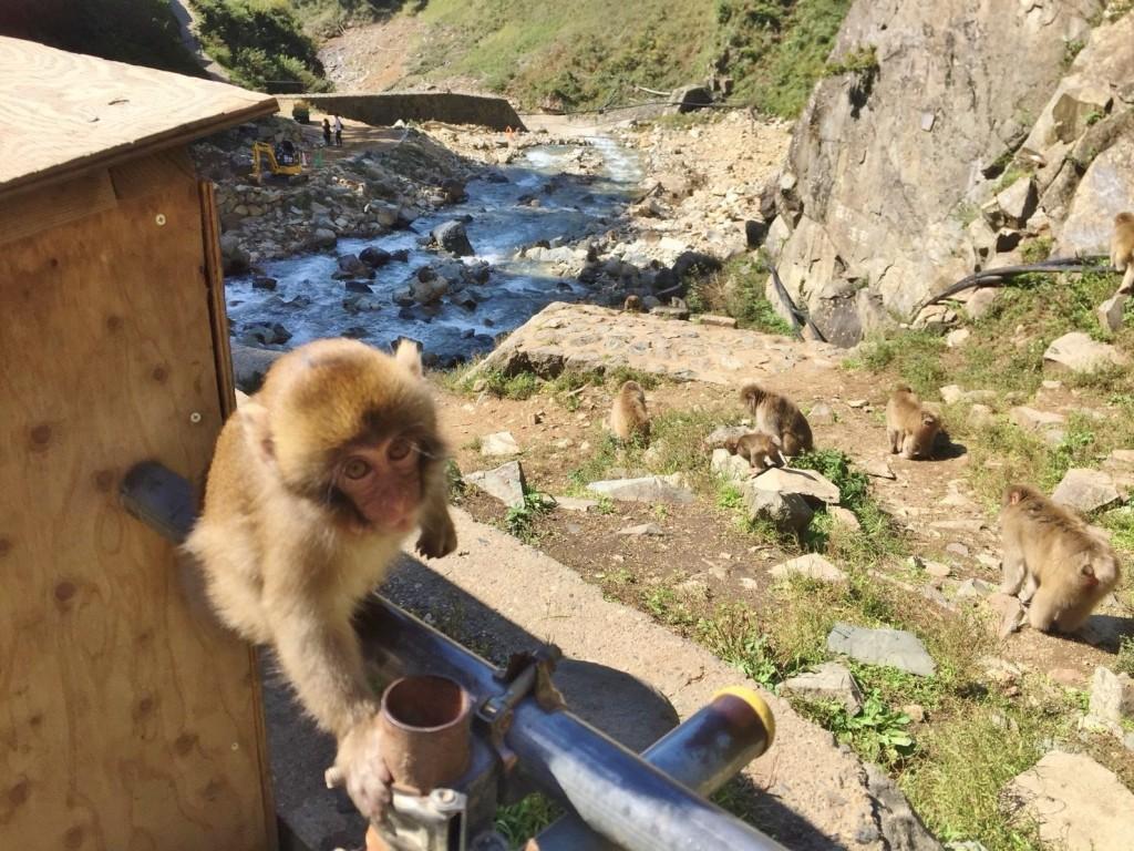 Snow Monkeys_181117_0375