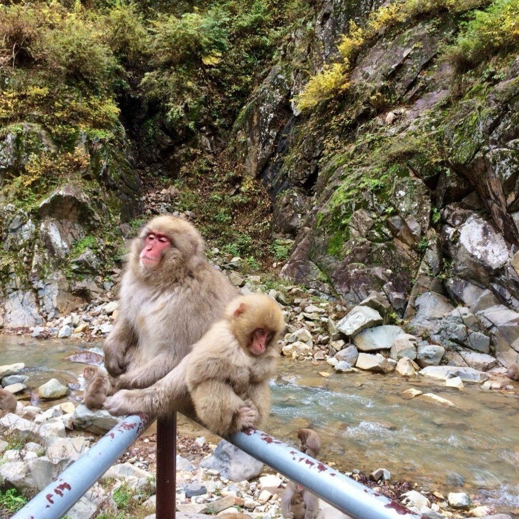 Snow Monkeys_181117_0382