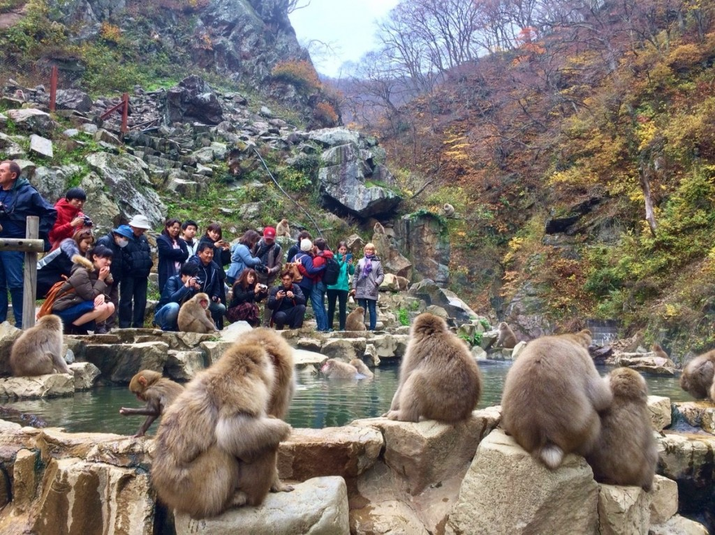 Snow Monkeys_181117_0387