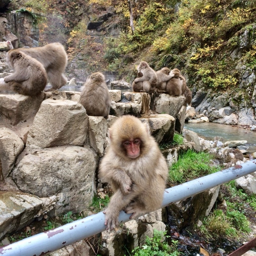 Snow Monkeys_181117_0392