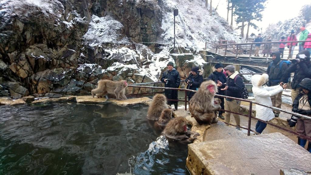 Snow Monkeys_190122_0414