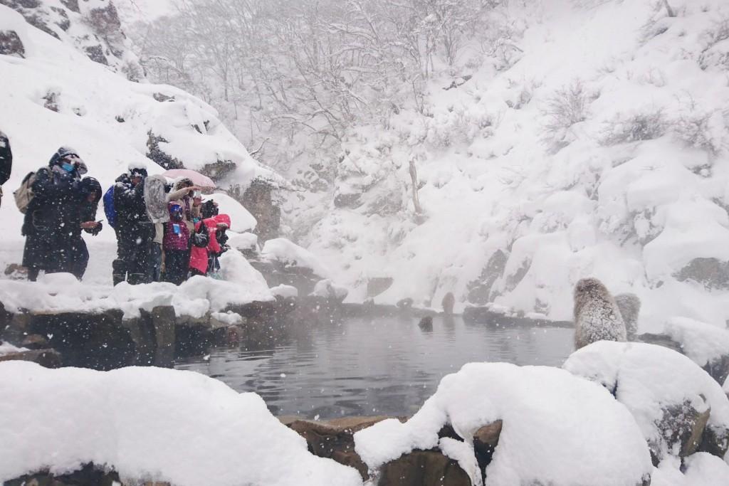 Snow Monkeys_190122_0424