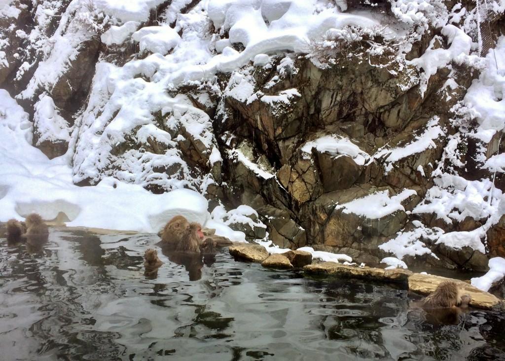 Snow Monkeys_190124_0431