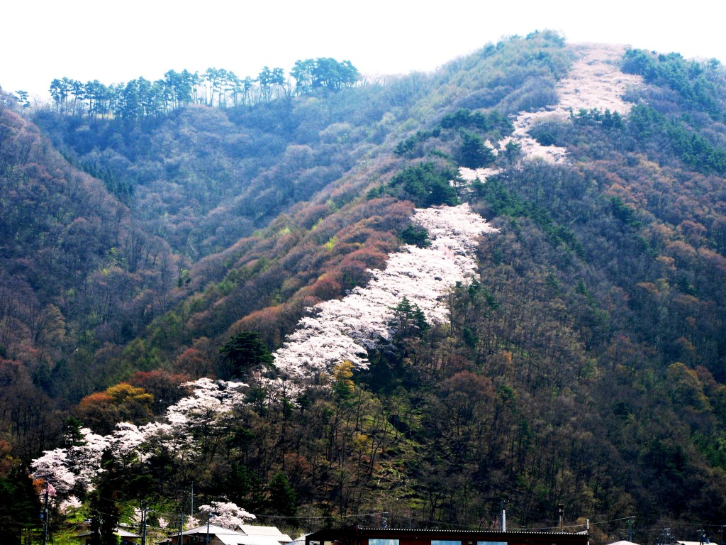 Hikarujoyama