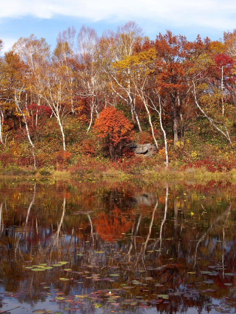 shiga-kogen-autumn