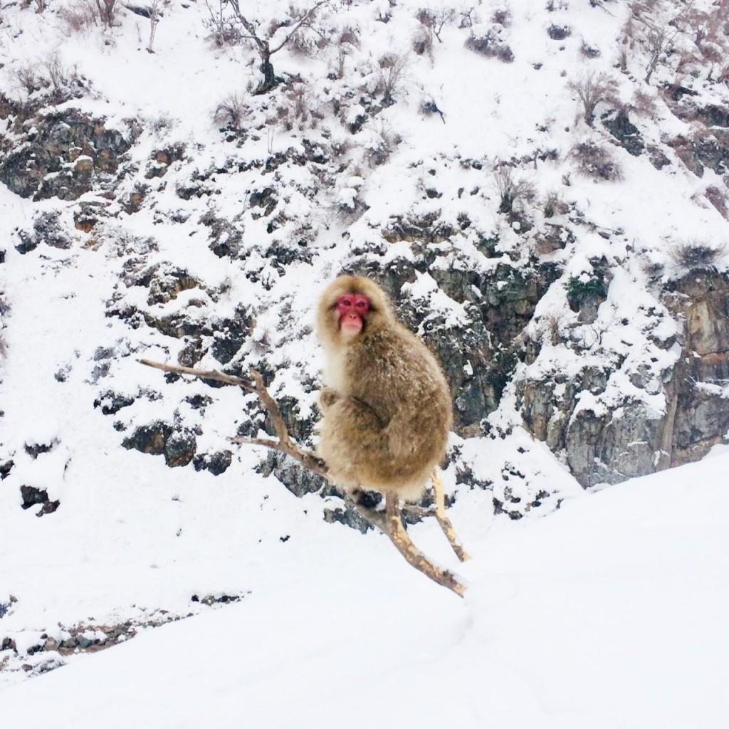 Snow Monkeys_190217_0438