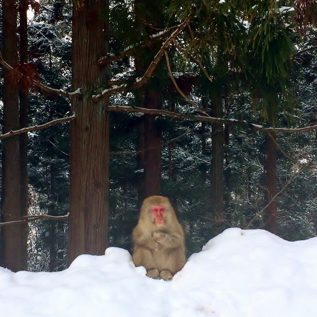 Snow Monkeys_190227_0444