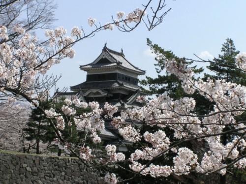 Matsumoto Castle Cherry Blossom 2