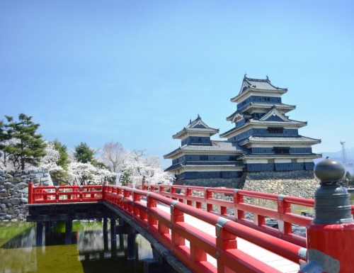 Matsumoto Castle Cherry Blossom 3