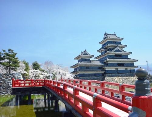 Matsumoto Castle Cherry Blossom 3