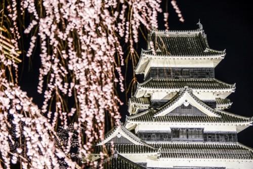 Matsumoto Castle Cherry Blossom 5