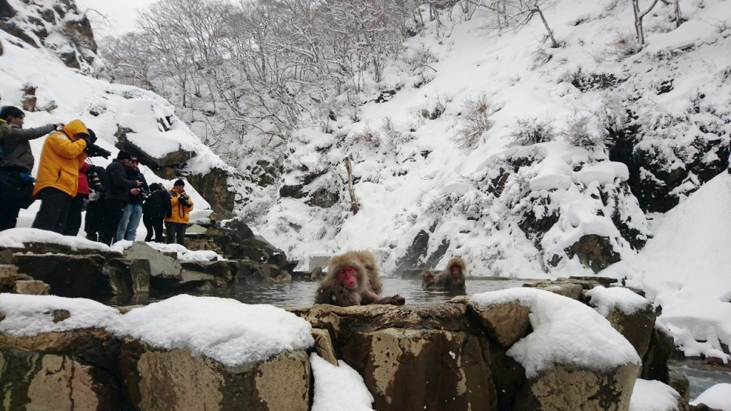 Snow Monkeys_190315_0456