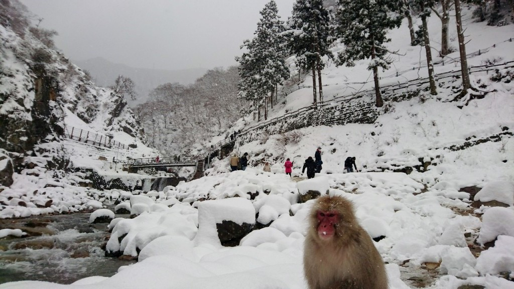 Snow Monkeys_190315_0457