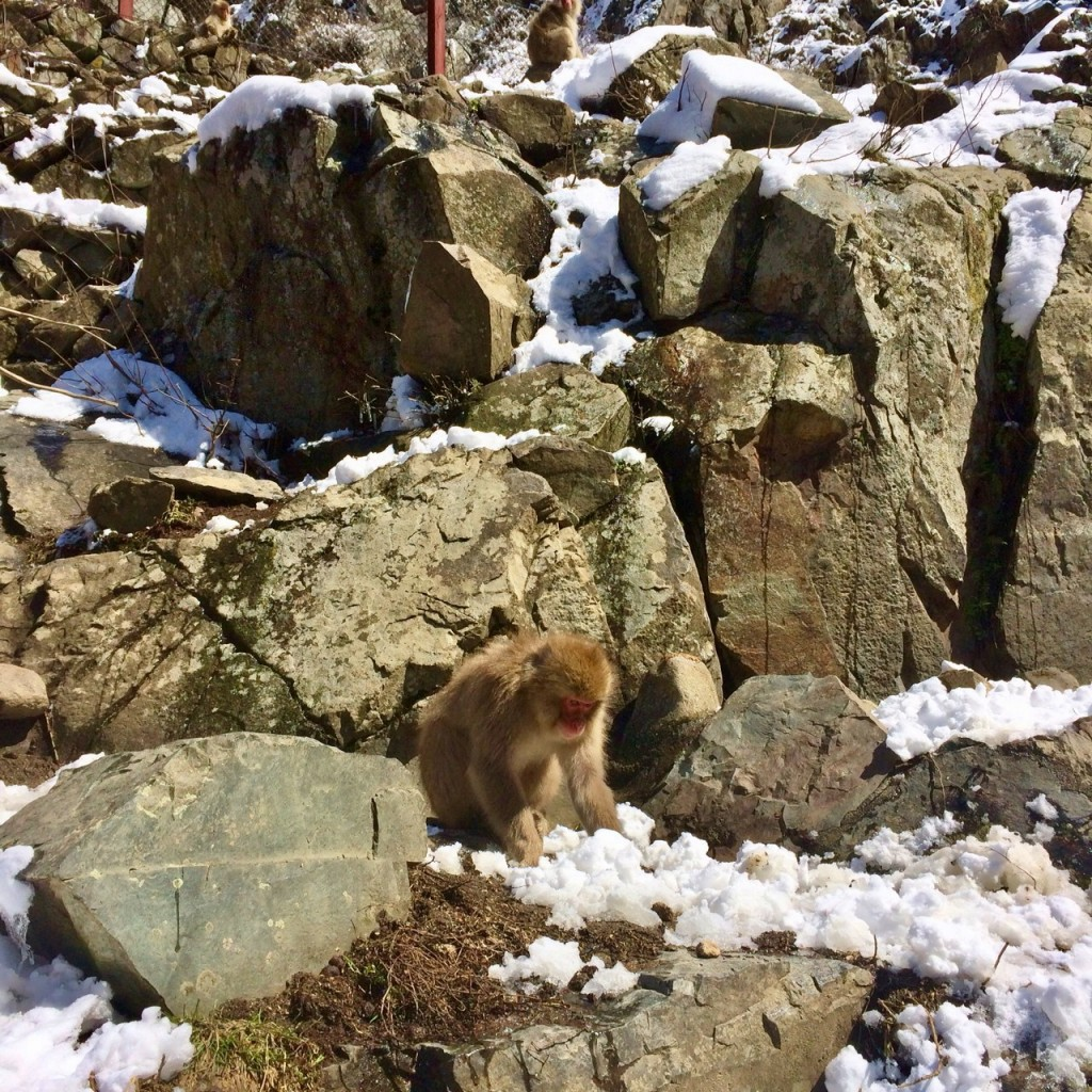 Snow Monkeys_190315_0460