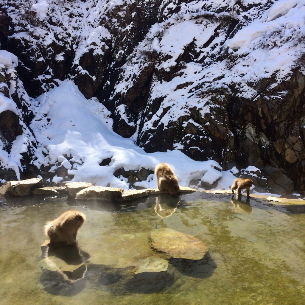 Snow Monkeys_190315_0464