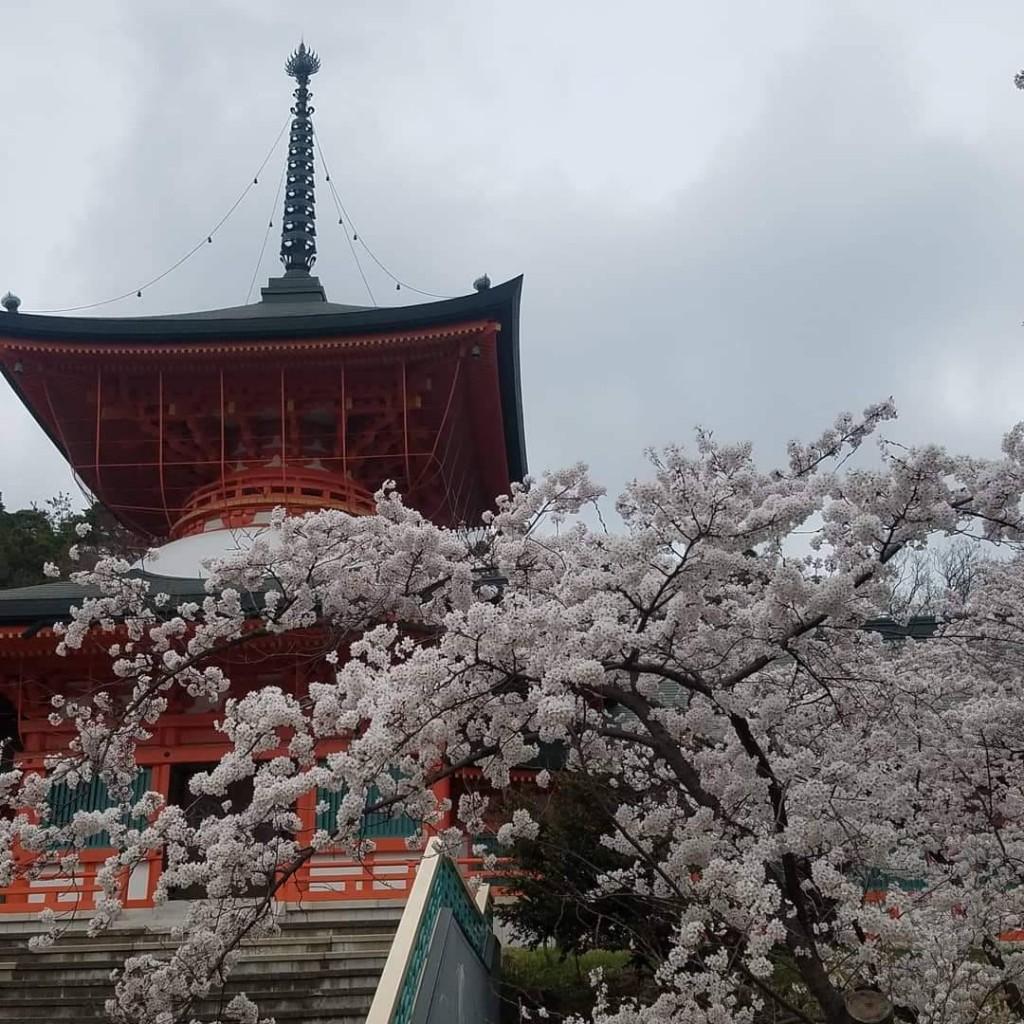 Cherry Blossoms Apr 20 Nagano