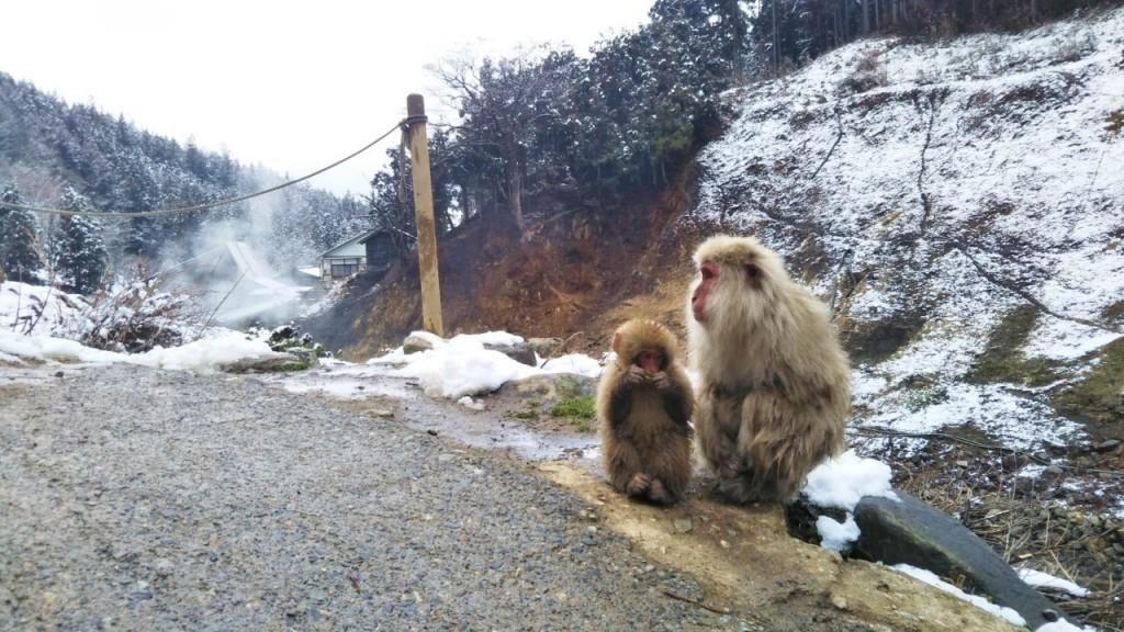 Snow monkeys 2019_190422_0008