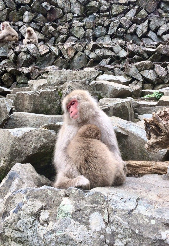 Snow monkeys 2019_190427_0029