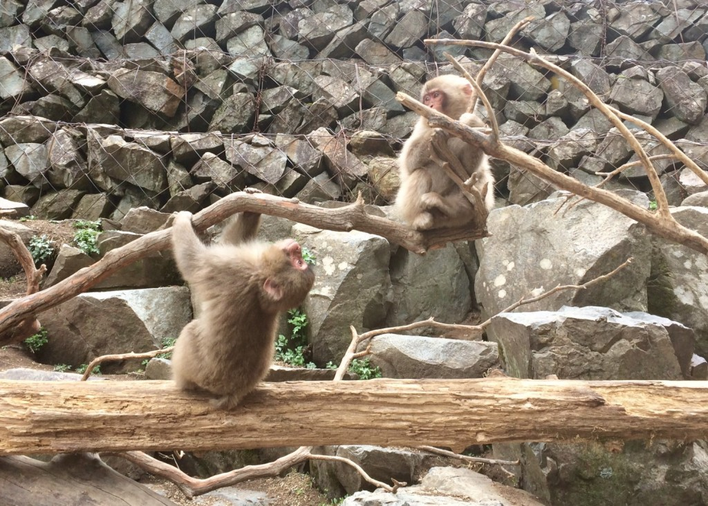 Snow monkeys 2019_190427_0033