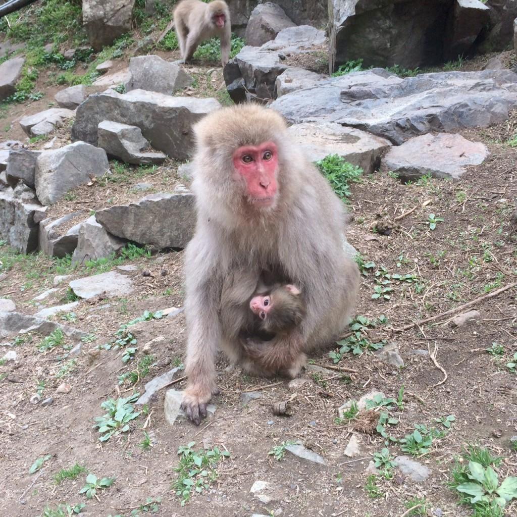 Snow monkeys 2019_190427_0035