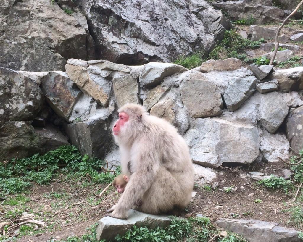 Snow monkeys 2019_190427_0037