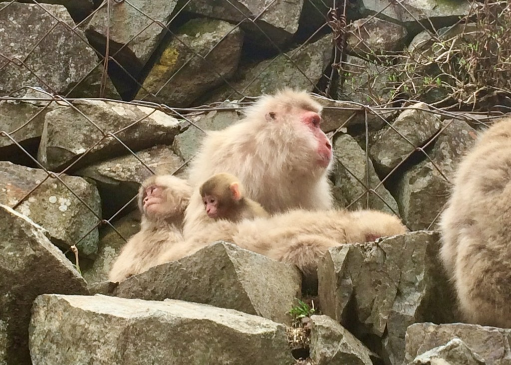 3bc4f4778 We are very happy to announce that the first babies of 2019 are now being  welcomed to the Snow Monkey Park! Expectant mothers give birth from  late-April to ...