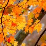 長野縣內及周邊20個最佳紅葉觀賞地