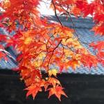 10個在京都看紅葉的最佳地點