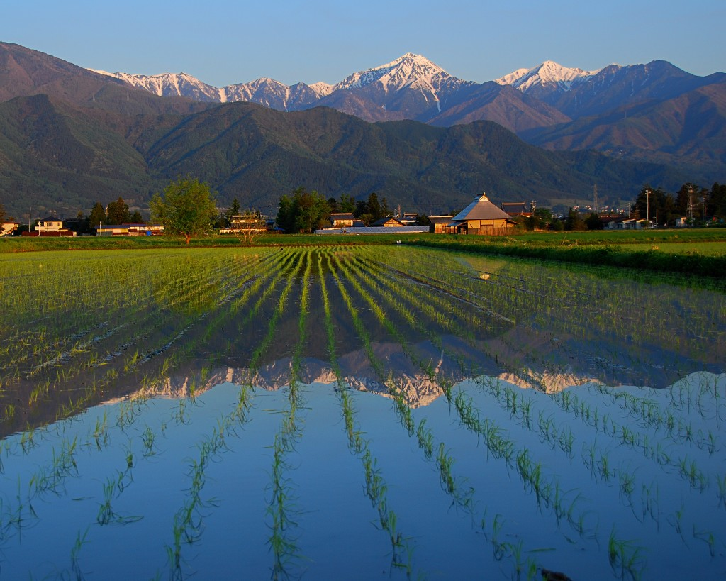 Rice fields and Japan Alps