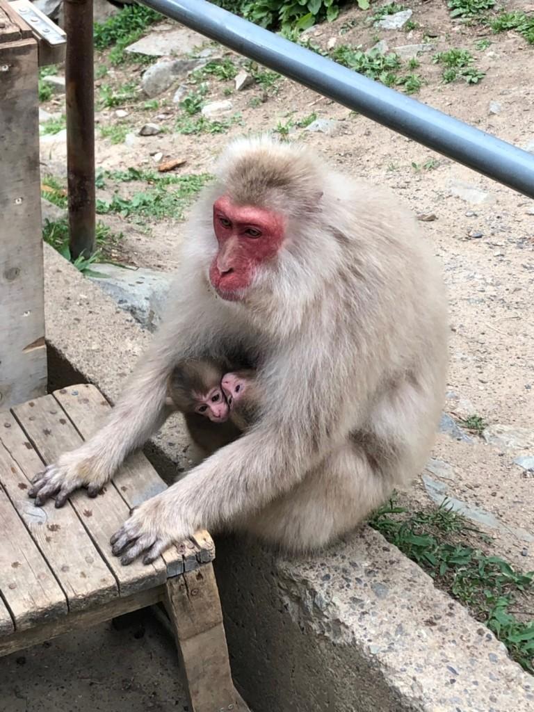 Snow monkeys 2019_190517_0046