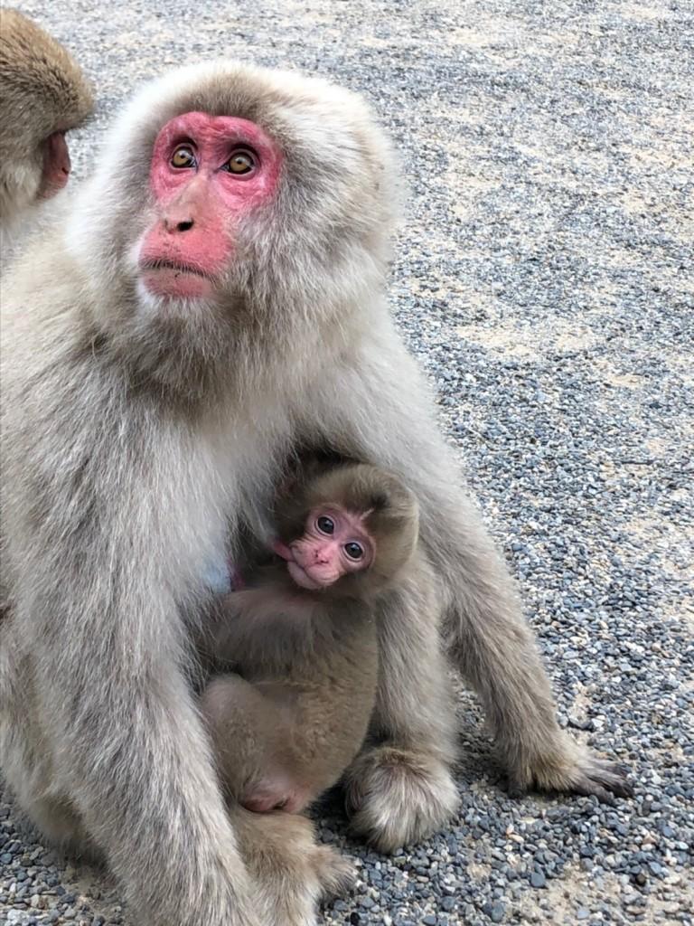 Snow monkeys 2019_190517_0049