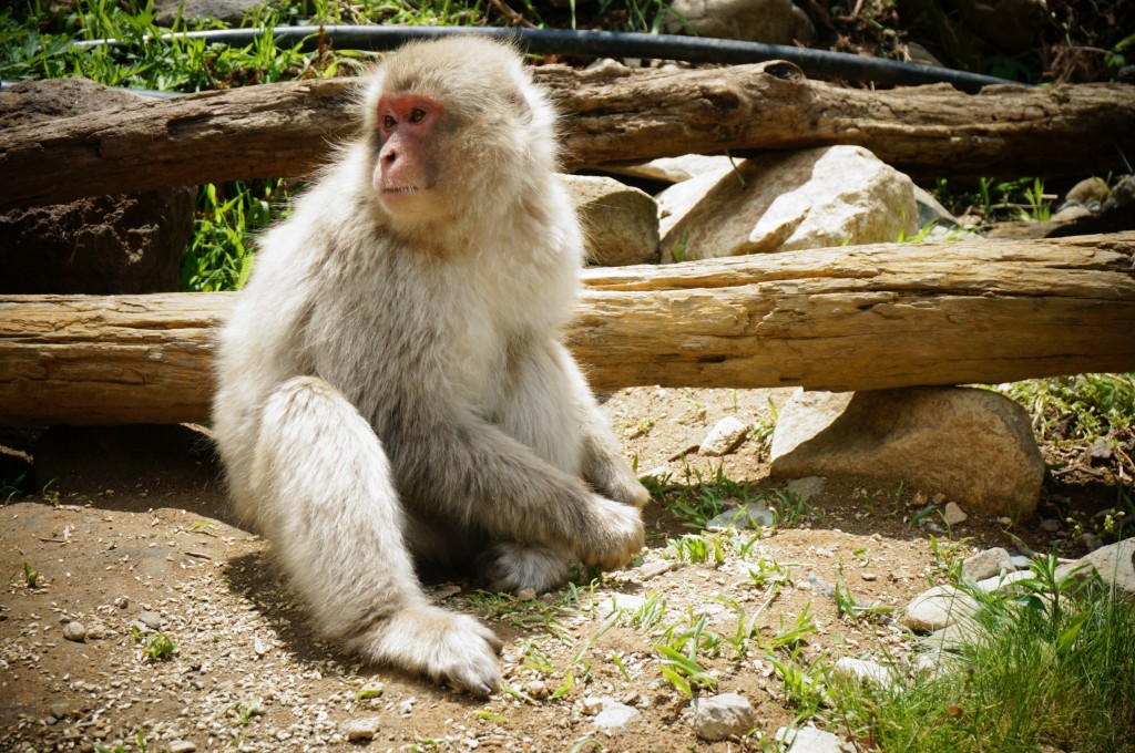 Snow monkeys 2019_190517_0055
