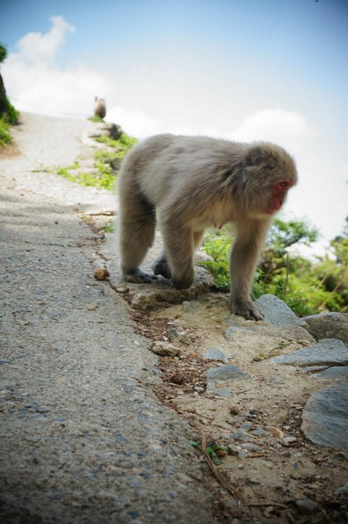 Snow monkeys 2019_190517_0057