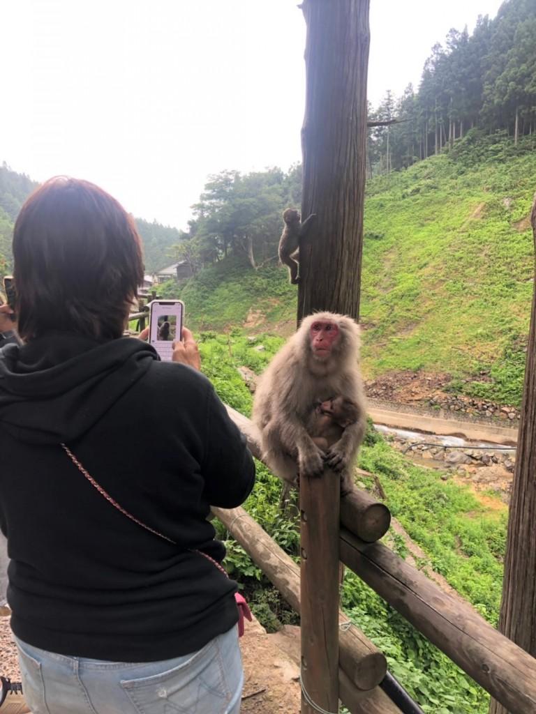Monkeys 20190624_190625_0001