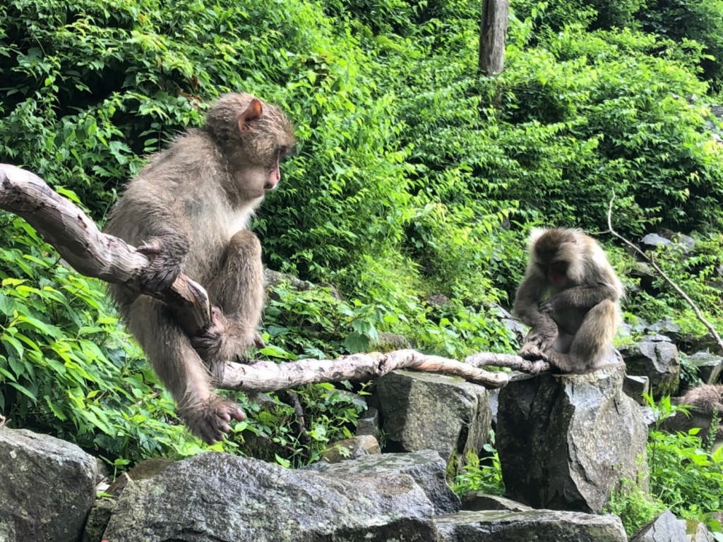 Monkeys 20190624_190625_0004