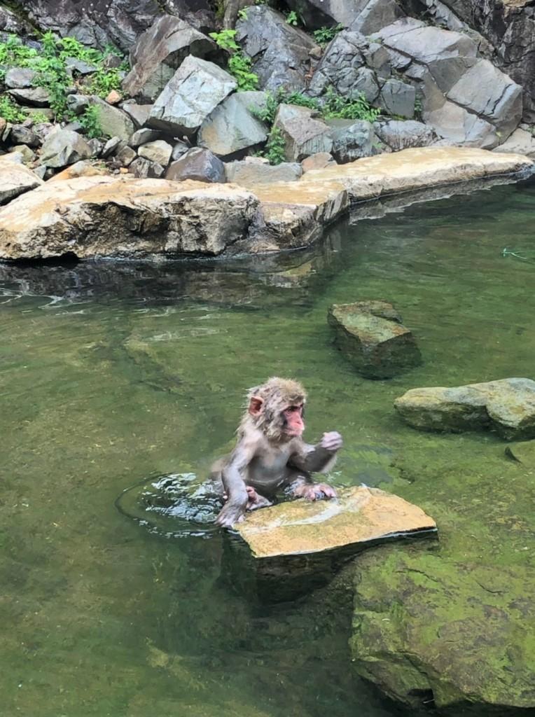 Monkeys 20190624_190625_0013