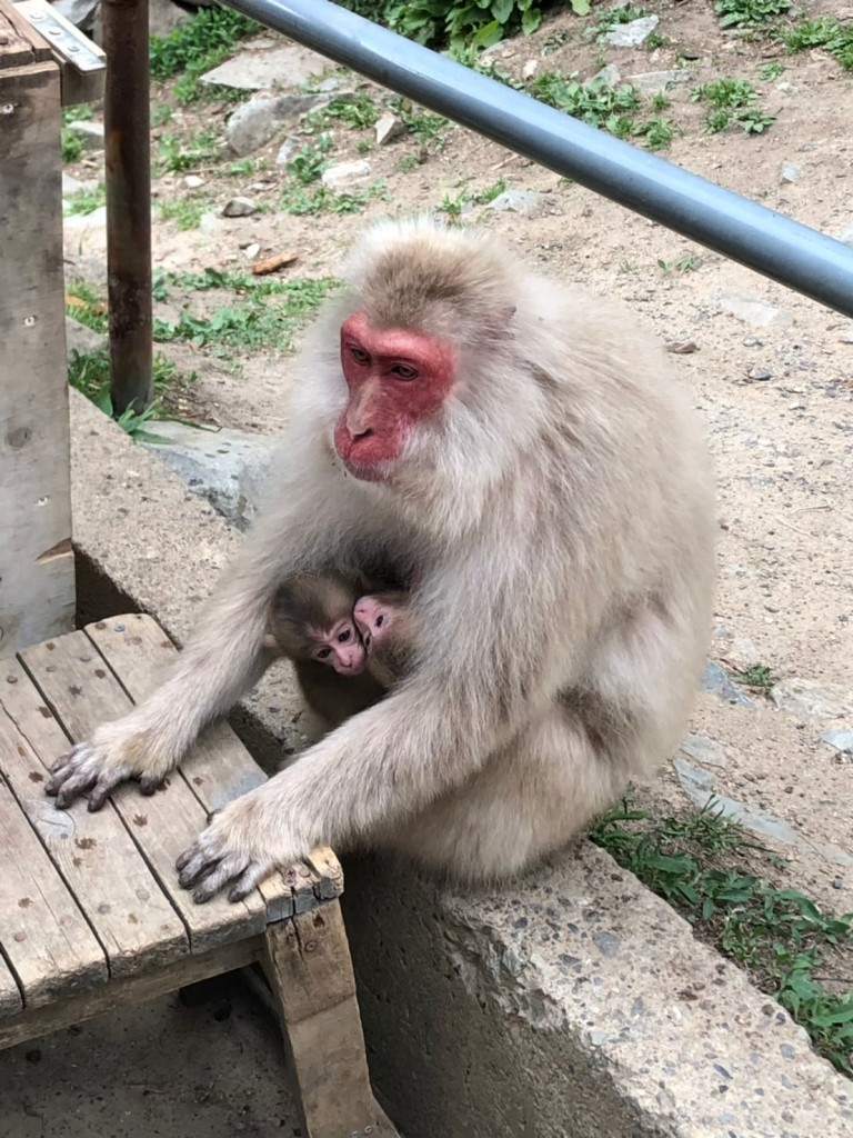 Snow monkeys 2019_190625_0046