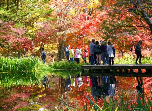 The Best Places to See Autumn Leaves in Nagano
