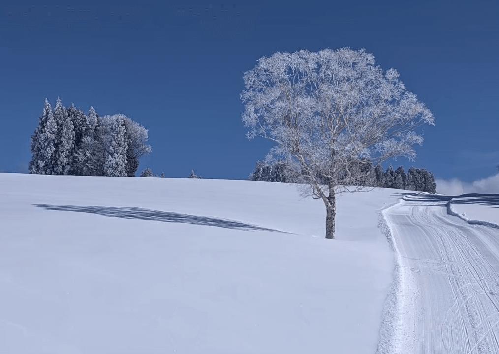 nozawa-onsen-ski-resort