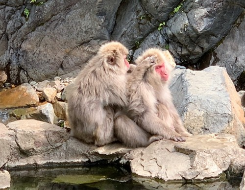 Jigokudani Snow Monkey Park General Information