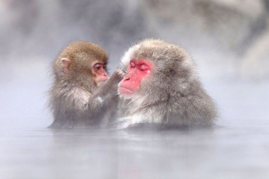 Snow Monkeys, Zenko-ji Temple & Sake
