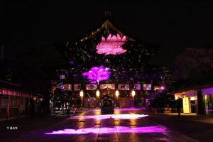 zenkoji-temple-illumination