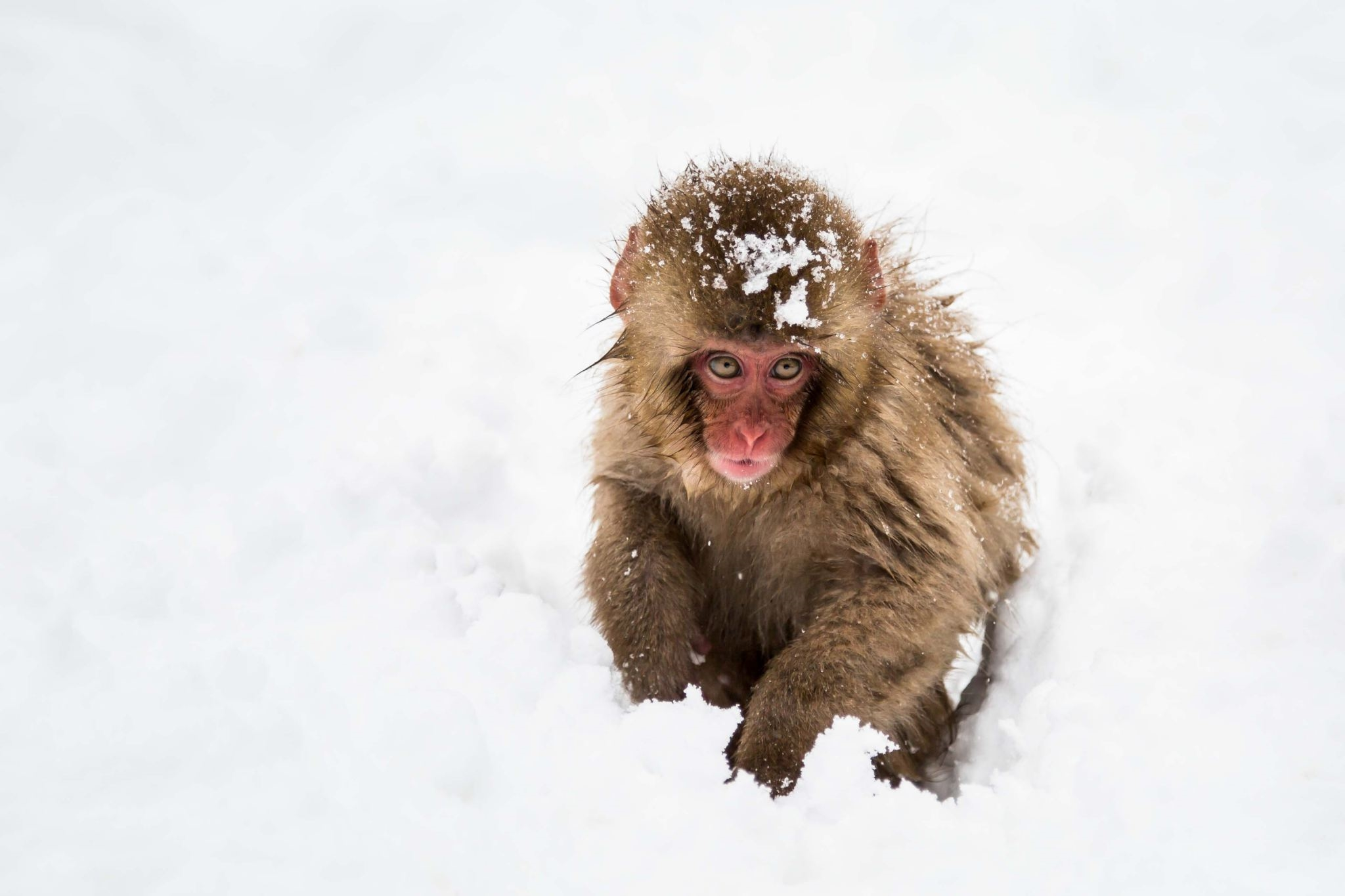 Snow Monkey Resort Tours