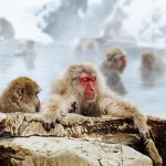 Snow Monkey Park Information