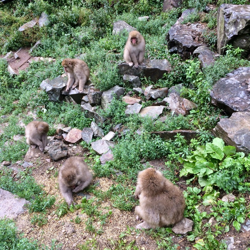 Snow monkeys 2019_190924_0075