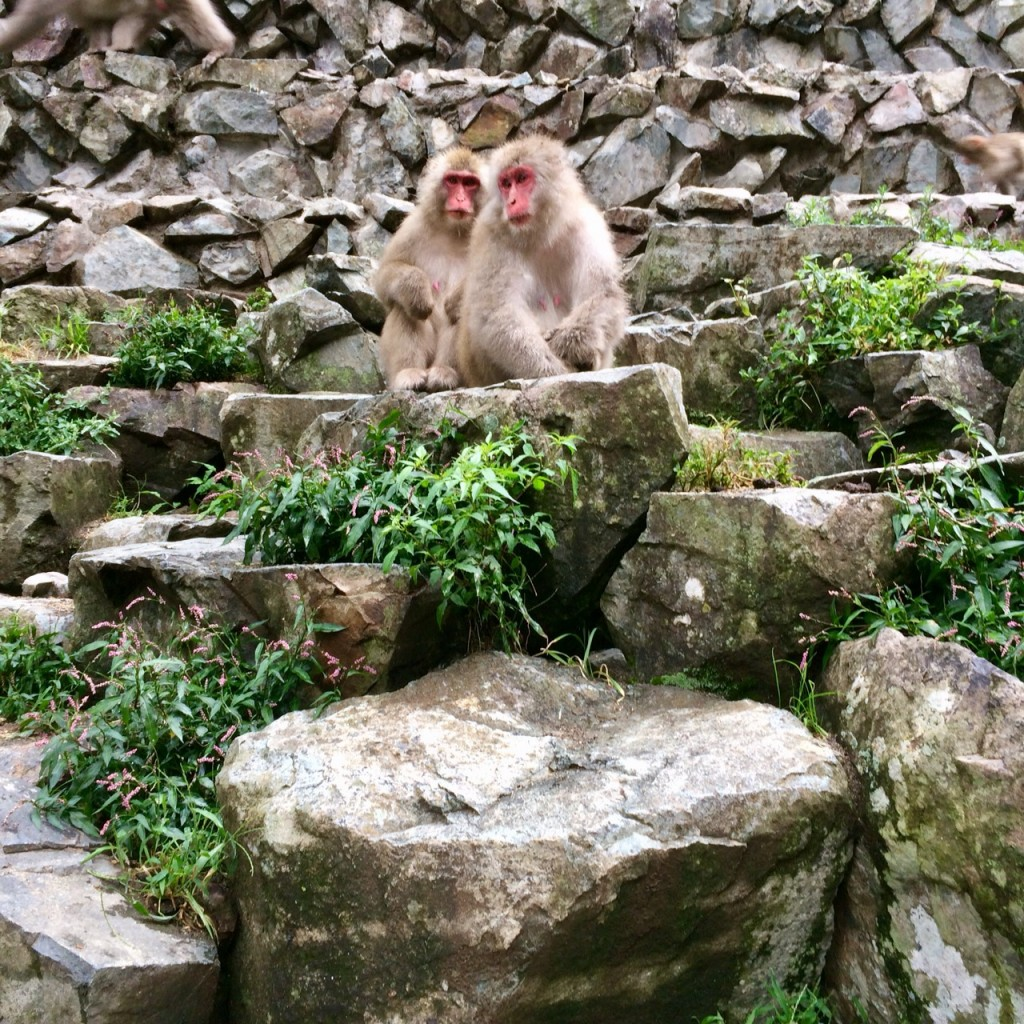 Snow monkeys 2019_190924_0079