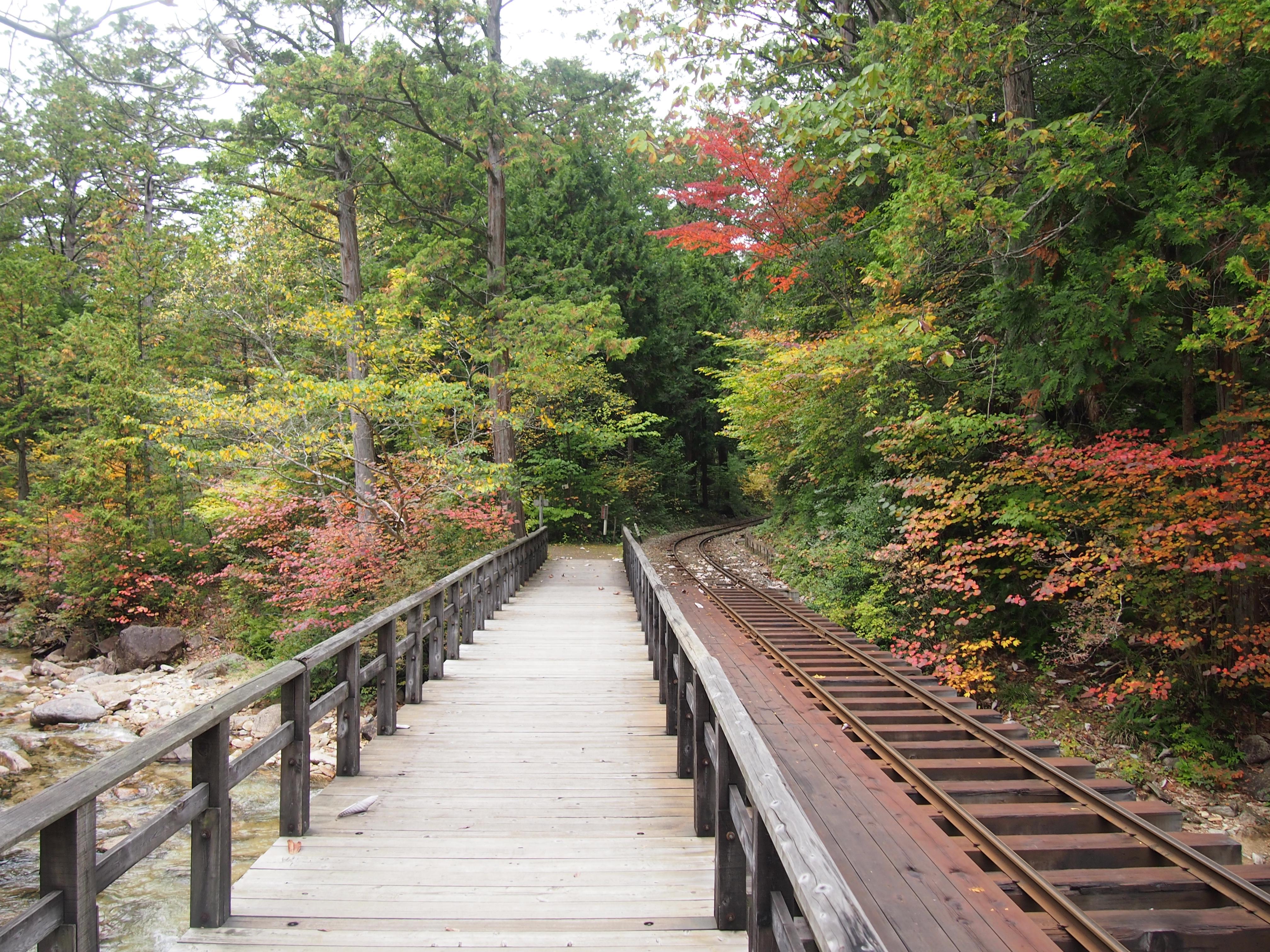 赤泽自然休养林