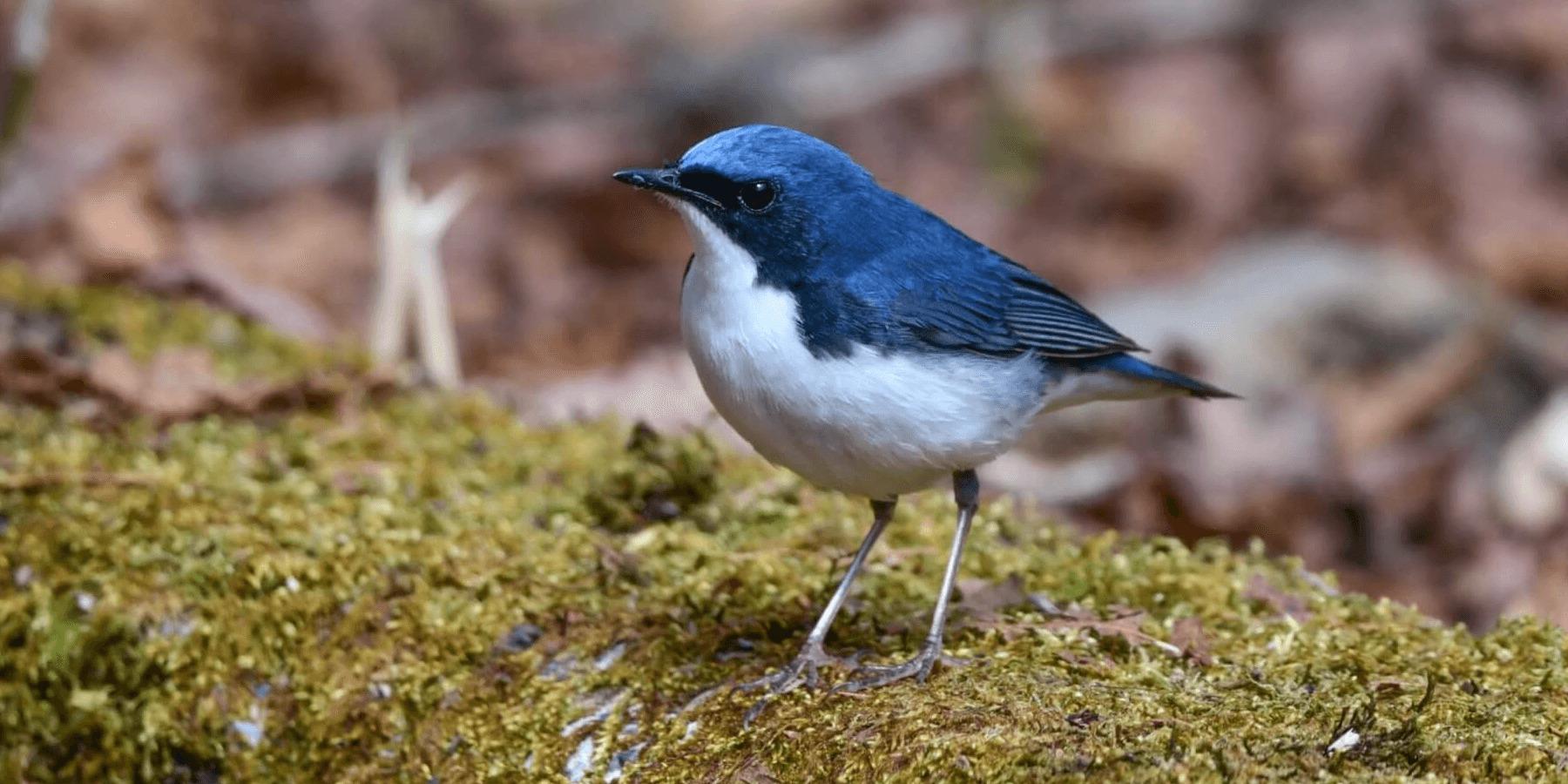 wildlife-bird-banner